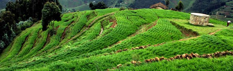 Rwanda Mountain Farm