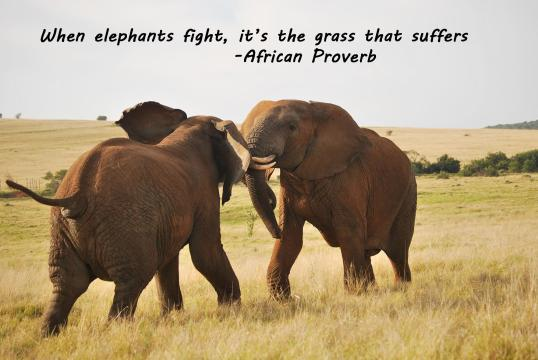 Elephants Quote