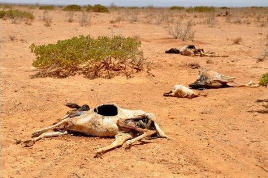 somaliland-drought
